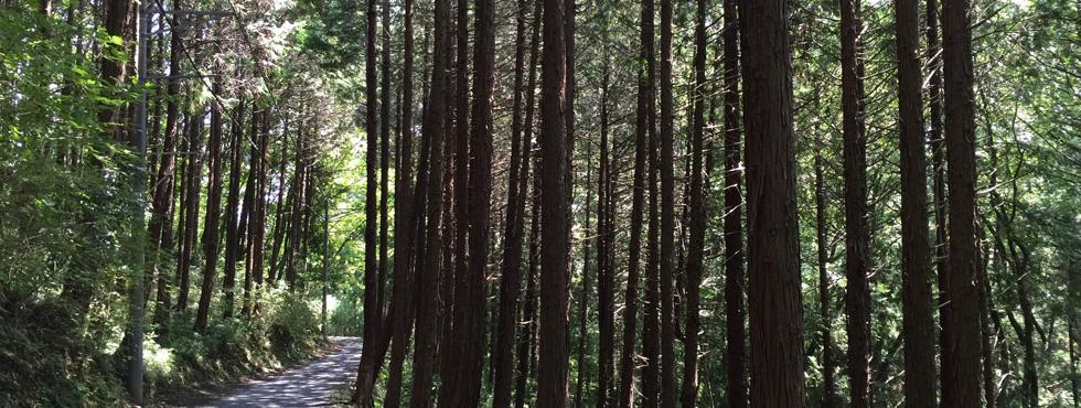 スライド3:森のトレイル道の写真。